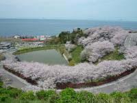 桜の咲く季節になりました