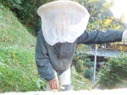 防虫ネットを被って巣箱の掃除