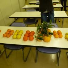 私が受講生のために持参した柑橘類を机に並べて・・・・