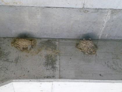 車庫の軒先に作ったツバメの巣