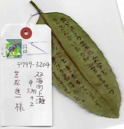 兵頭淳志さんから届いた珍しい葉っぱのハガキ