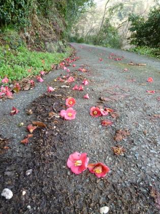 椿の花散りし山道