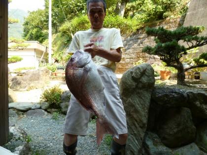 息子の友人から届いた大きな鯛