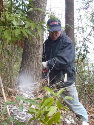 クヌギの木を伐採する井上さん