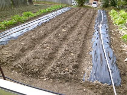 家庭菜園のジャガイモ植え終える