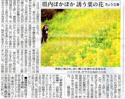 昨日の愛媛新聞4面で紹介された菜の花の話題